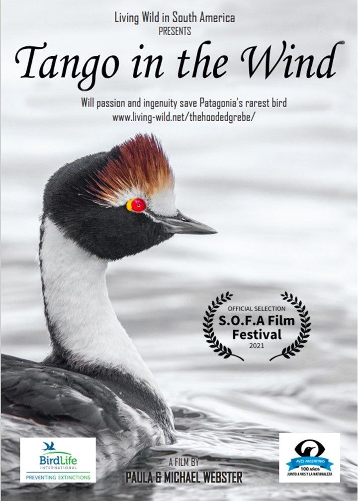 Tango In The Wind Poster